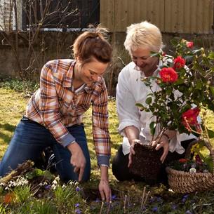 Blumen pflanzen  Blumen Pflanzen | jamgo.co